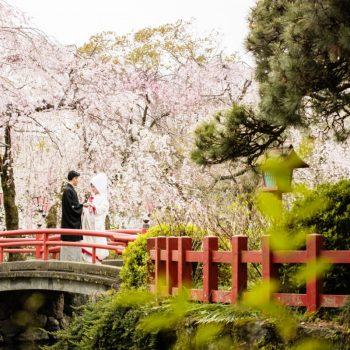 三嶋大社×桜