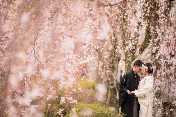 前撮りのオススメ~桜~